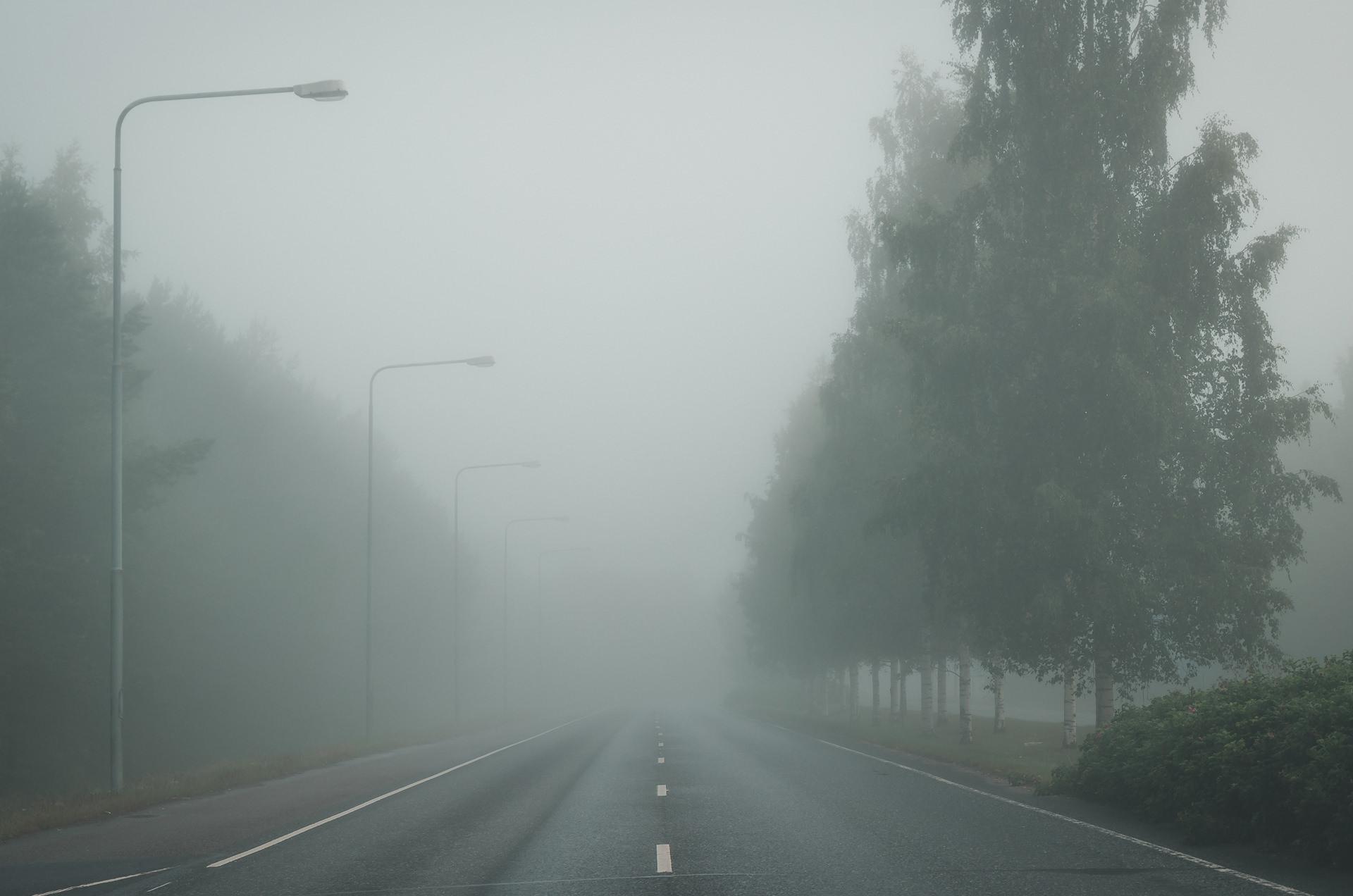 skogsväg dimma